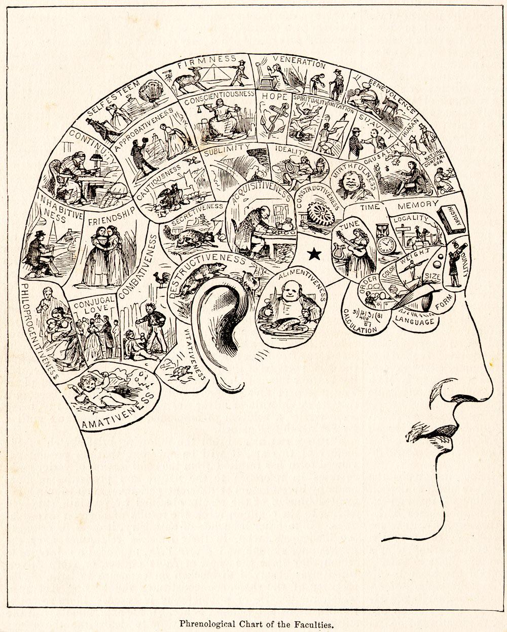 Phrenologist's chart